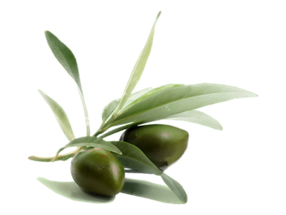 Olive trees for sale